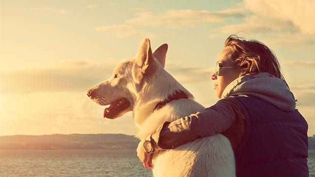 hearing-dog-companion